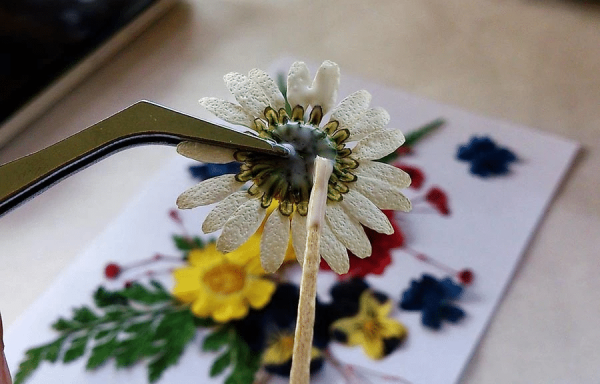 sử dụng nhíp để gắn hoa khô lên giấy
